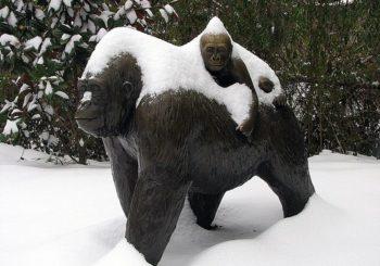 Academia Gorila zaprasza na zimowy obóz BJJ
